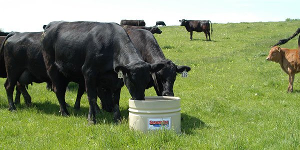 New Generation Feeds Acquires Western Feed Supplements