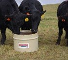 Cows using Supplement in Barrel