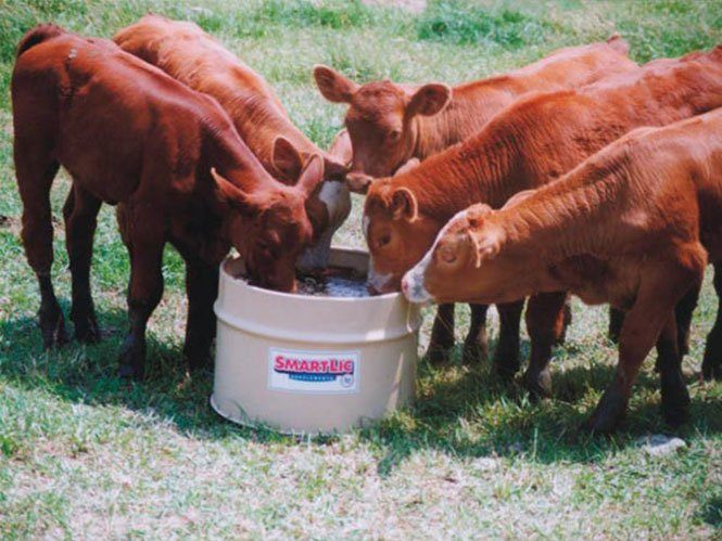Cattle, Calf, and Cow Feed Supplements
