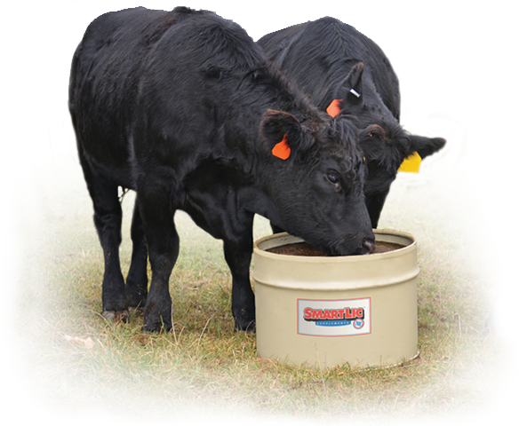 Feeding directions for cattle supplements