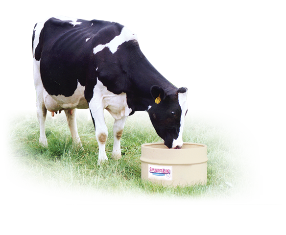 Feeding directions for Dairy Cattle Supplements
