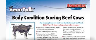 Body Conditioning Scoring Beef Cows SmarTalk™