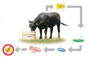 Breaking the Fly Cycle on Cattle