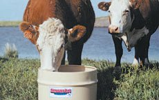 Cattle Forage Digestion