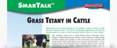 Grass Tetany in Cattle SmarTalk